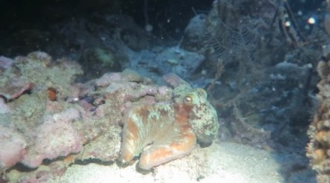 Here's our new friend! Picture by our divemaster, Alex.
